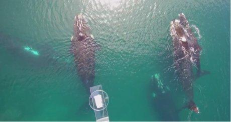 Analyse santé baleine