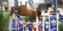Championnat de France des 3 ans Sport Selle Français - Gold de Flusel
