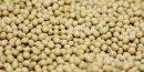 Monsanto revoit a la baisse ses previsions annuelles