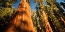 4 parcs nationaux Etats-Unis