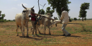 Labour Afrique