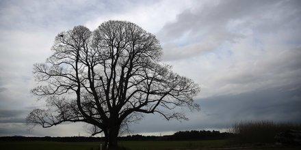 nuage arbre climat