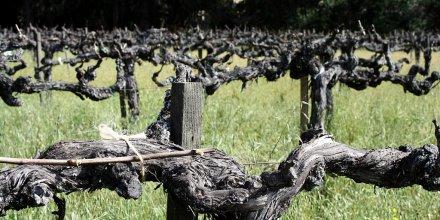 Vignoble / Vineyard, par Marit & Toomas Hinnosaar. Via Flickr CC License by.