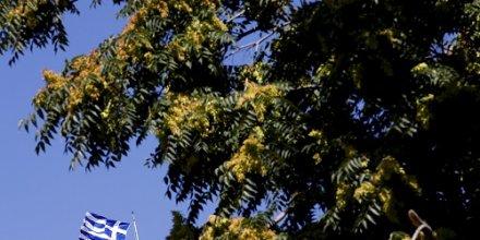 Grèce pins