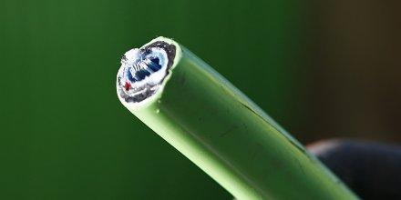 Cable dénudé de fibre optique / Internet