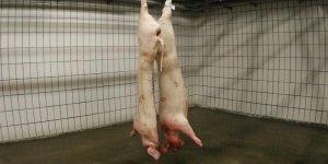 Les offres de reprise des abattoirs aim repoussees au 19 mars