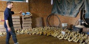 La production de canards et d'oies mise en pause face a la grippe aviaire