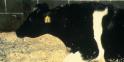 1986/2002 - La crise de la vache folle