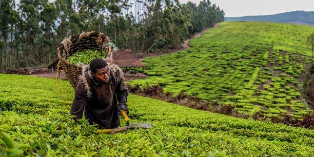L'agriculture et l'usage des sols sont parmi les principaux leviers vers une économie décarbonée