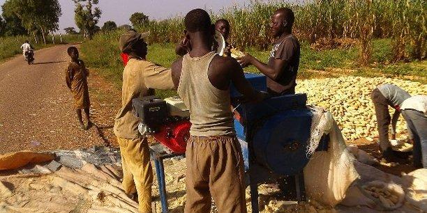 Apparue pour la première fois en Angola en 2009, la chenille légionnaire d'automne n'a commencé réellement à se répandre qu'à partir de 2016, menaçant désormais la sécurité alimentaire sur le Continent.