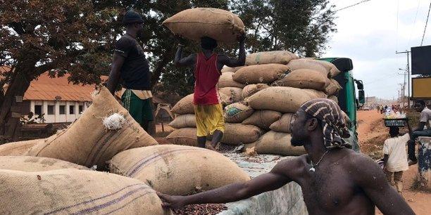 Selon les projections de l'Office national du cacao et du café (ONCC), la production cacaoyère dans la région sud-ouest du Cameroun devrait enregistrer une baisse pour cette saison.