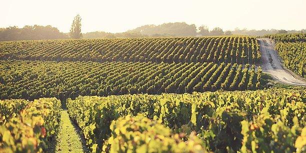 U'Wine s'intéresse au segment de marché des grands crus uniquement
