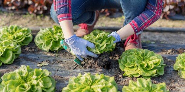 Pour couvrir la demande alimentaire des Français, 26 millions d'hectares de surfaces agricoles sont nécessaires (surfaces cultivées, prairies ...) en France ou ailleurs dans le monde, calcule l'étude.