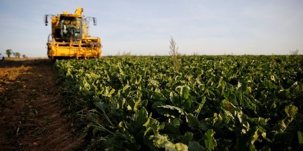 Au total, 14% de l'emploi agricole est en bio selon l'organisme public qui en suit l'évolution.