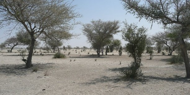 Pour faire face aux conséquences du réchauffement climatique, les 17 Etats de la sous-région du Sahel projettent d'investir quelque 400 milliards de dollars d'ici à 2030.