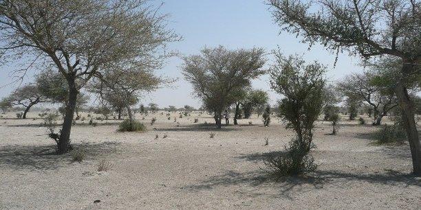 Le passage de 1,5°C à 2°C pourrait provoquer une forte hausse de la sécheresse qui sévit notamment dans la région du Sahel.