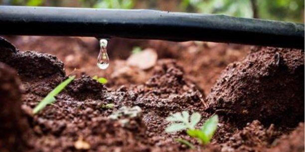 Le nouveau schéma d'irrigation concernera 22 000 ha de vigne, pour l'essentiel