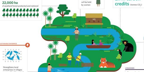 Le projet Sumatra Merang Peatlang consiste à restaurer plus de 20.000 hectares de tourbières dégradées dans la forêt tropicale au Sud de l'île indonésienne, afin de protéger des centaines d'espèces en danger, dont le célèbre tigre de Sumatra. C'est l'un des derniers investissements de Mirova Althelia, pour 5 millions d'euros.