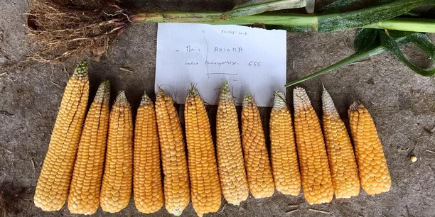 Axioma développe des produits bio-stimulants pour diminuer la quantité d'engrais et de pesticides dans l'agriculture.