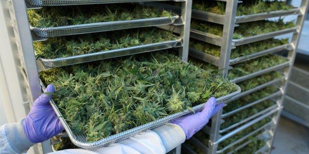 Altria prend 45% du producteur de cannabis cronos pour 1.8 millards de dollars[reuters.com]