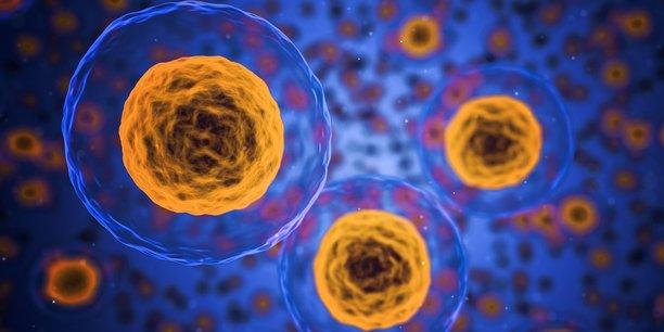 Cellules Souches La Startup Treefrog Therapeutics Leve 600 000