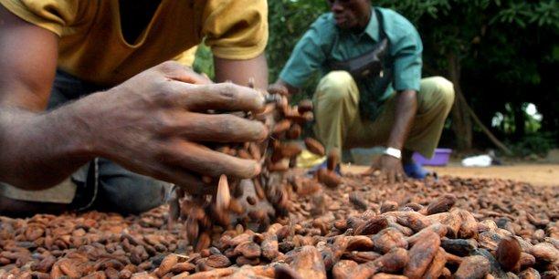 La représentation professionnelle de la filière du cacao au Cameroun explique que cette baisse des prix relève d'un phénomène saisonnier.