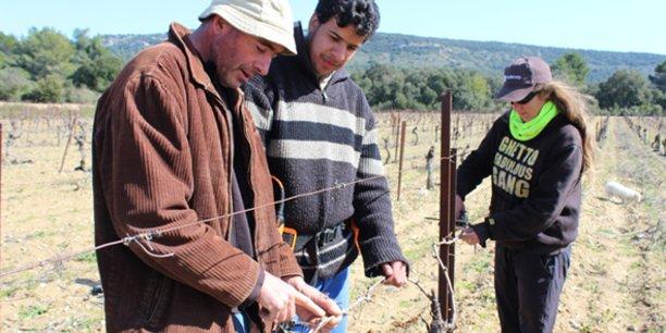 Vigne de Cocagne est le 1er vignoble d'insertion de France