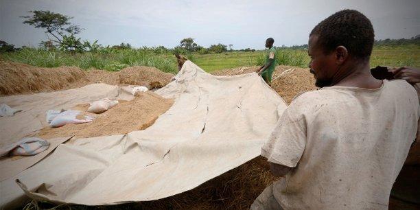 Avec une production actuelle estimée à quelque 700 000 tonnes de riz blanchi par an, la Côte d'Ivoire ne peut satisfaire qu'entre 40% et 50% de sa demande locale.
