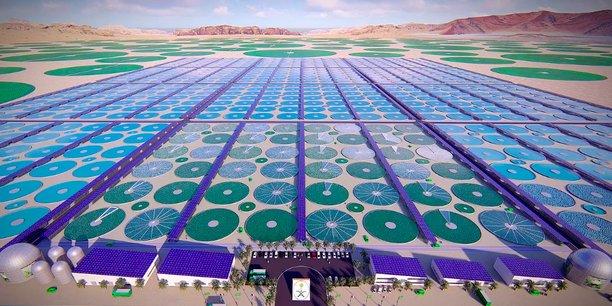 Le projet de ferme industrielle de production de micro-algues en Arabie Saoudite, un débouché potentiel pour Nenuphar