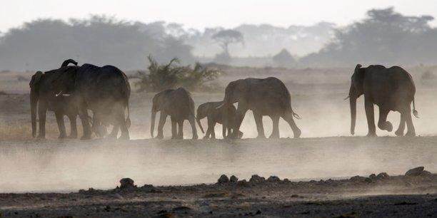 Botswana : le gouvernement lève l'interdiction de la chasse à l ...