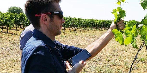 L'application a été co-conçue par l'Institut Français de la Vigne et du Vin et Montpellier SupAgro