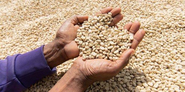 Pour la prochaine saison de 2019/2020, la production de café en Ethiopie devrait atteindre 7,35 millions de tonnes, soit une augmentation de 1,4% par rapport à la saison 2018/19.