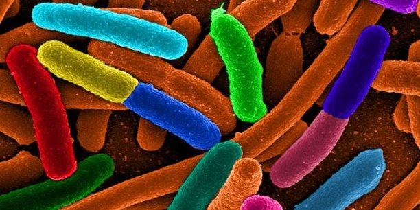 Le dispositif médical contre la maladie d'Alzheimer que développe REGEnLIFE a un effet sur le microbiote