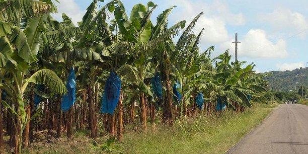 En novembre 2018, la Cameroon Development Corporation (CDC) ne figurait déjà plus dans le fichier des exportateurs de bananes du Cameroun.