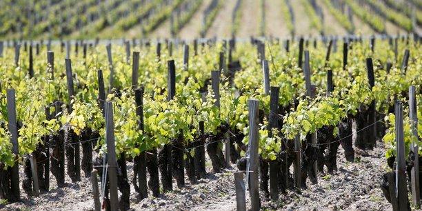 France: la recolte viticole 2019 attendue en baisse de 6% a 13%[reuters.com]