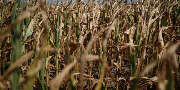 Canicule: paris demande a la ce d'anticiper des aides agricoles[reuters.com]