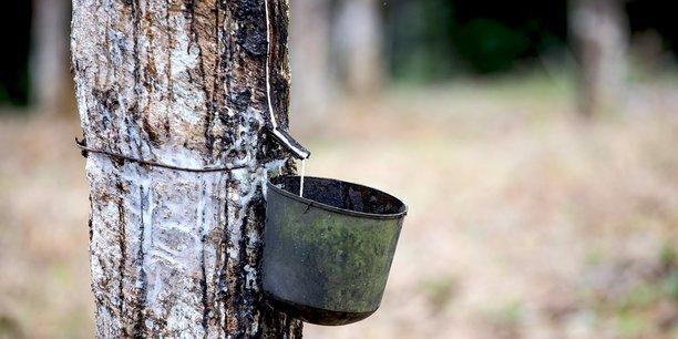 L'outil vise à stimuler la transparence au sein de la supply chain du caoutchouc naturel