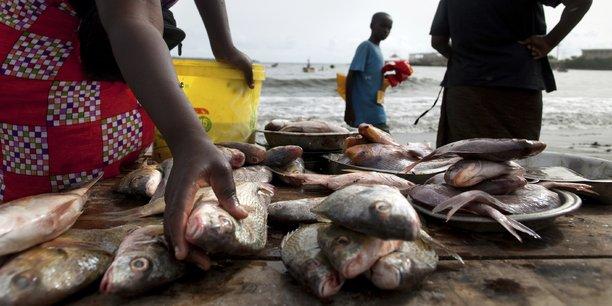 Congo : deux nouvelles agences dédiées à l'agriculture, l'élevage et à la pêche
