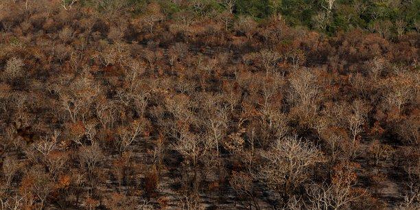 500 millions de dollars debloques pour l'amazonie, selon l'elysee[reuters.com]