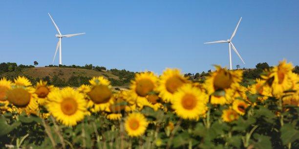 Le tournesol supporte bien les climats secs, mais sa production risque de chuter à cause de la hausse des températures.