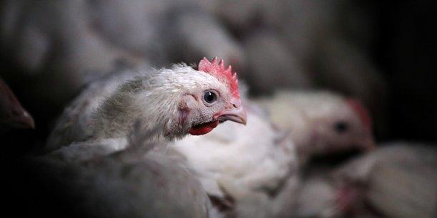 La chine leve le boycott de la volaille americaine[reuters.com]