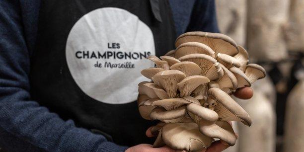 Les champignons de Marseille poussent à toute vitesse