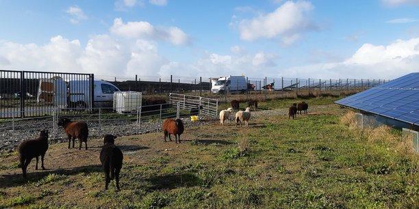 Site de Tougas à Saint-Herblain où VSB Energies a déployé un troupeau de 70 moutons pour entretenir un terrain de 14 hectares où sont implantés des panneaux solaires.