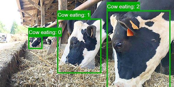 La solution déployée par Dilepix est capable de détecter de manière précoce les comportements anormaux des animaux.
