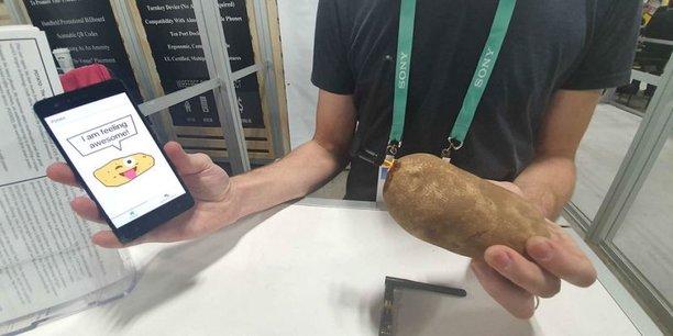 Voici Potato, une pomme de terre dotée d'une puce électronique reliée par Bluetooth à une application smartphone.