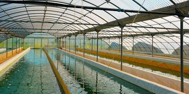 Un des bassins de production d'Algosud, sur son site de Lunel (34)