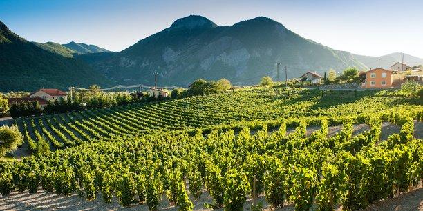 Ce vin – rare – qui fait toute la saveur de Domaine Allemand