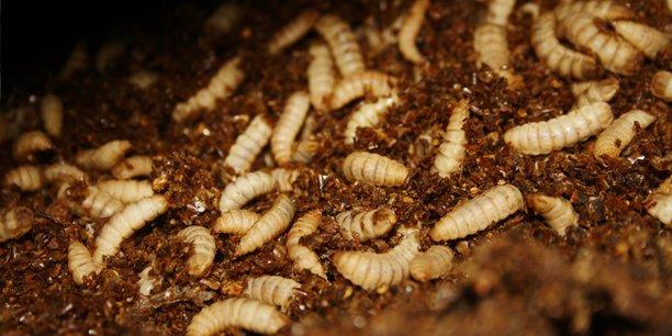 Agronutris va implanter une usine de production ainsi qu'un élevage de mouches à Reims.