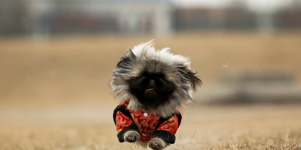 Les chiens bientot reconnus comme animaux de compagnie en chine[reuters.com]