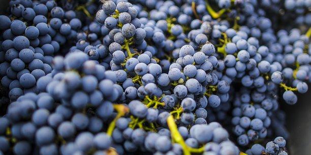 Le vrac de vin bio se vend nettement plus cher que les bordeaux classiques.